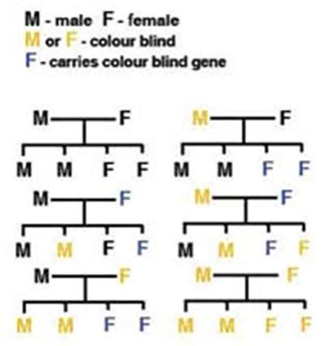 color blindness genetics raffles