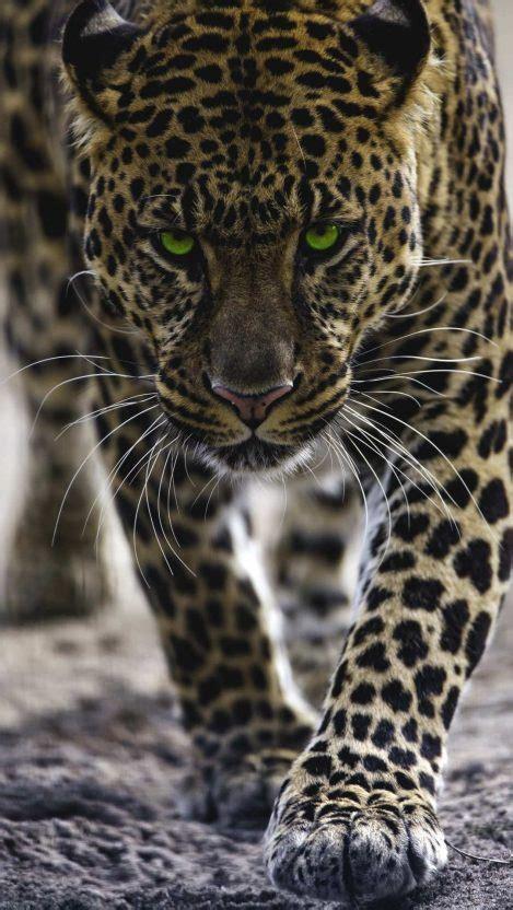 Jaguar iPhone Wallpaper Free - GetintoPik