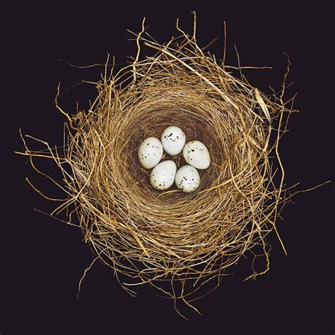 Bird Nests Used to Look More Like Fortresses - Scientific American