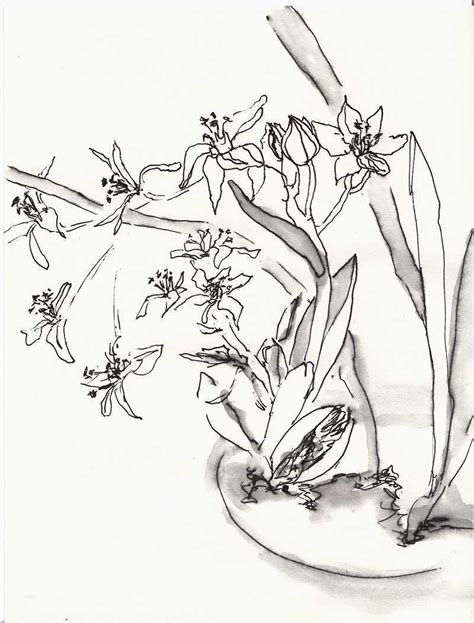 zeichnen anfaenger vorlagen elegant blumen zeichnen