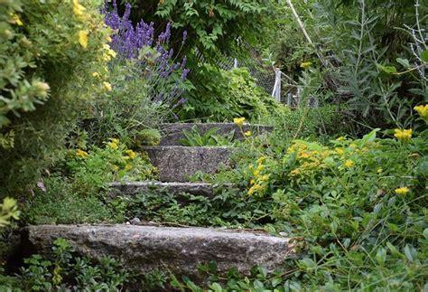 Verwilderter Garten  Herrichten & Neu Gestalten