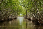 The Mangroves of the Everglades - Captain Mitch's ...