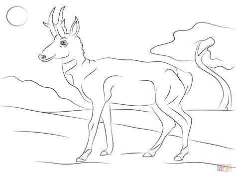 Pronghorn Antilocapra Americana Coloring Page