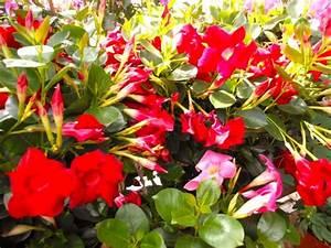 Plante Fleurie Intérieur : plante fleuries ~ Premium-room.com Idées de Décoration