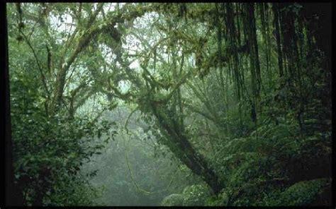 Tropical Rainforest Climate Rain
