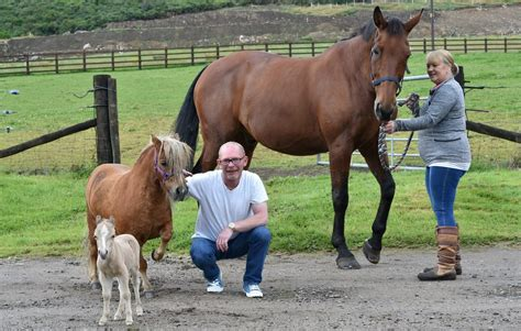 pony miniature horse shetland foal tiny tiniest birth giving swns surprises bundle everyone yahoo