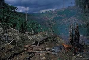 Amazon Rainforest | Stephen Leahy, International ...
