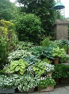 Pflanzen Für Schattengarten : pin von karen mccreary auf into the garden pinterest g rten pflanzen und rund ums haus ~ Sanjose-hotels-ca.com Haus und Dekorationen