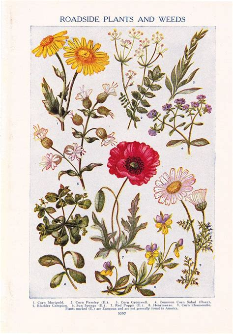 flower print vintage plant home decor art