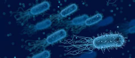 Infection Biology - University of Skövde