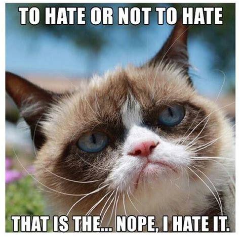 Grumpy Cat Memes Funny - funny grumpy cat meme