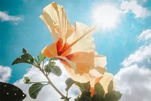 Hibiskus Hat Blattläuse Was Tun : hilfe meine pflanze hat sonnenbrand stadtlandflair ~ Lizthompson.info Haus und Dekorationen