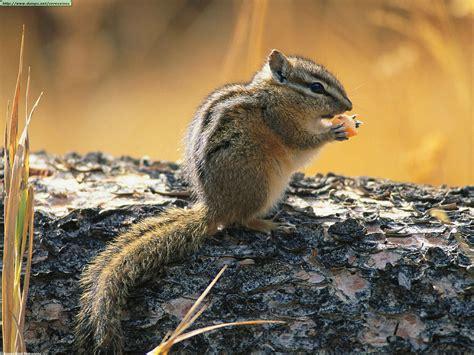 Backyard Animals by Squirrels Photos