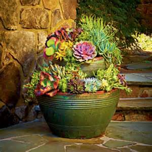 succulent planting ideas garden