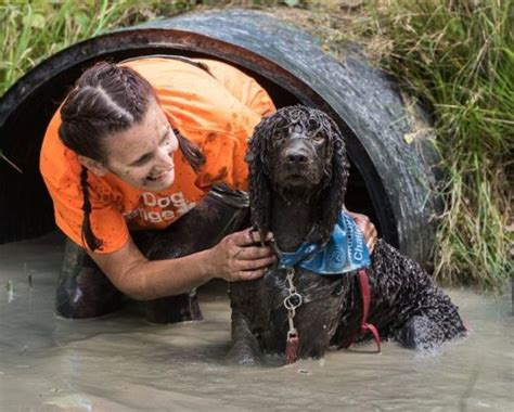 muddy obstacle   dogs   owners coming  uk