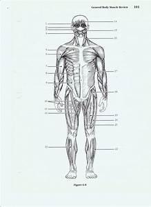 Human Body Systems Worksheets Pdf  U2013 Skgold Co