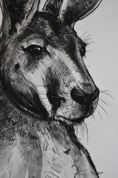 kangaroo  koala drawings images animal