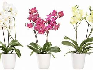 Rempoter Une Orchidee : comment rempoter ses orchid es jardin int rieur ~ Mglfilm.com Idées de Décoration