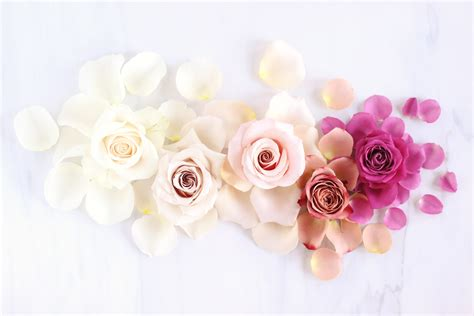 late summer flowers desktop wallpaper labzada wallpaper