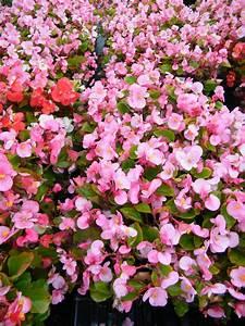 Annual Flowers  U2013 Jazzi U0026 39 S Flower Center