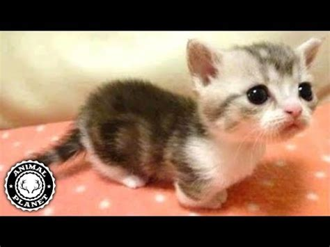 cute    funny cats  dogs
