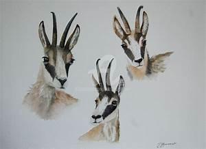 Animaux Décoration Intérieure : trois chamois aquarelle aquarelles d 39 animaux ~ Teatrodelosmanantiales.com Idées de Décoration