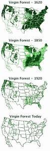 Long-term Ecological Goals - Forever Redwood