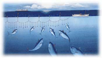 tuna facts oprt