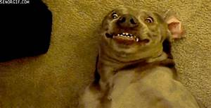 Dog Smiling GIF by Cheezburger - Find & Share on GIPHY