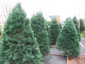 where do you find the best trees chatham nj patch