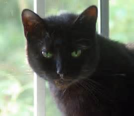 black cats with green pictures of black cats with green