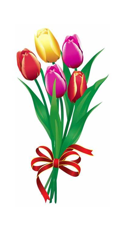 Spring Clipart Tulips Bouquet Tulip Flowers Potted