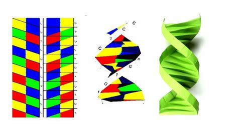 Origami Dna Template - Costumepartyrun