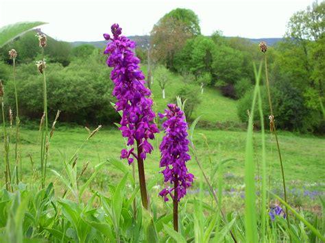 moucheron cuisine solution orchides sauvages orchides sauvages moucheron cuisine