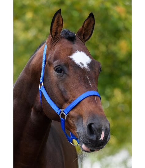 headcollar bright pony shetland headcollars sh kramer