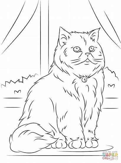 Coloring Cat Persian Sitting Popular Persain