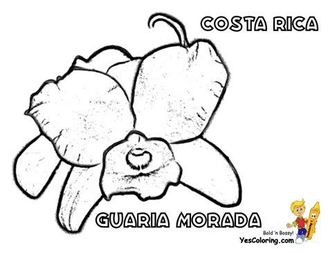 15 Cool Costa Rica Flag Coloring Page Gekimoe 93633