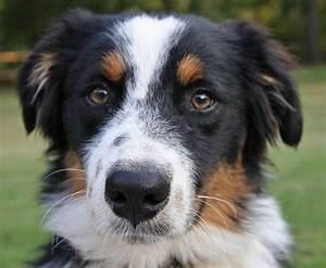 Kdyz si pes olizuje cumak