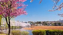 日本上野公園賞櫻-東京都景點介紹-HopeTrip專業旅遊網