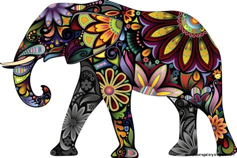 what color are elephants colorful elephant pictures wallpapers gallery