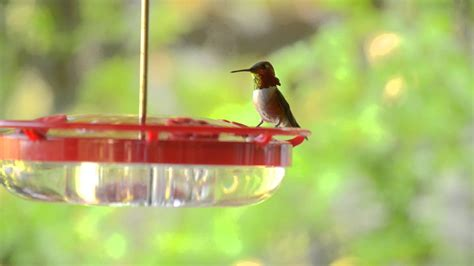 hummingbirds birds unlimited birds