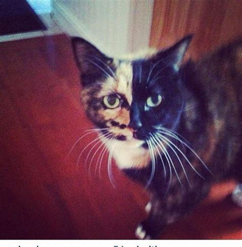 cat calico callie names week pets thesunchronicle funny call