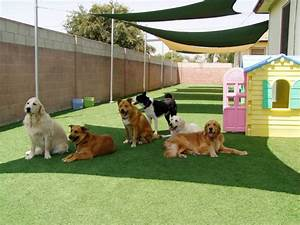 why doggy day care is the happiest place on earth With dog boarding in your home