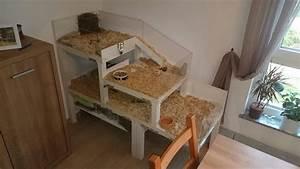 Meerschweinchen Gehege Ikea : pin von jasmin k punkt auf haariger mitbewohner pinterest meerschweinchen meerschweinchen ~ Orissabook.com Haus und Dekorationen