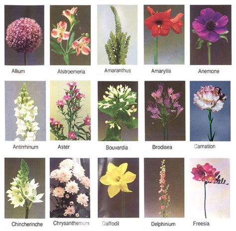 all types of flowers flowers general information