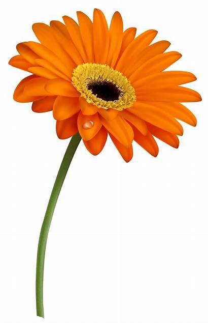 Daisy Clipart Flowers Gerber Clip Flower Gerbera