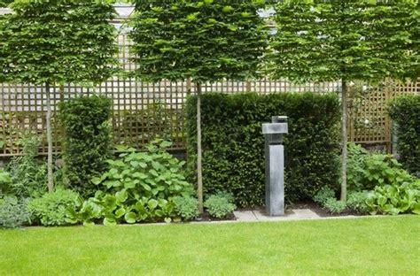 immergrüne bepflanzungen am gartenzaun sichtschutz garten b 228 ume immergr 252 ne pflanzen holz zaun