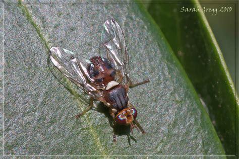 http://www.naturamediterraneo.com/forum/topic.asp?TOPIC_ID=127725