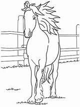 Horse Coloring Pages Printable Forget Supplies Don sketch template