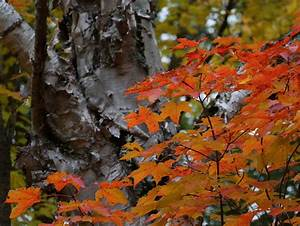 Photo gallery: Fall color arrives in northern Minnesota ...  Fall